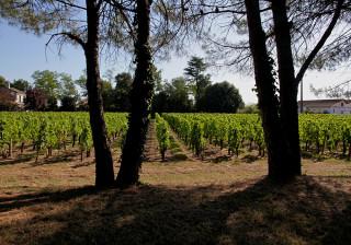 Le terroir du Château Hautes Graves d'Arthus et Moulins des Graves