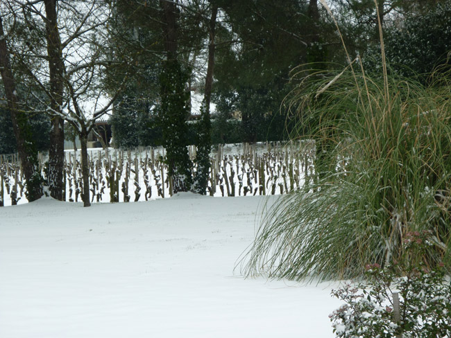 Nos vignes sous la neige